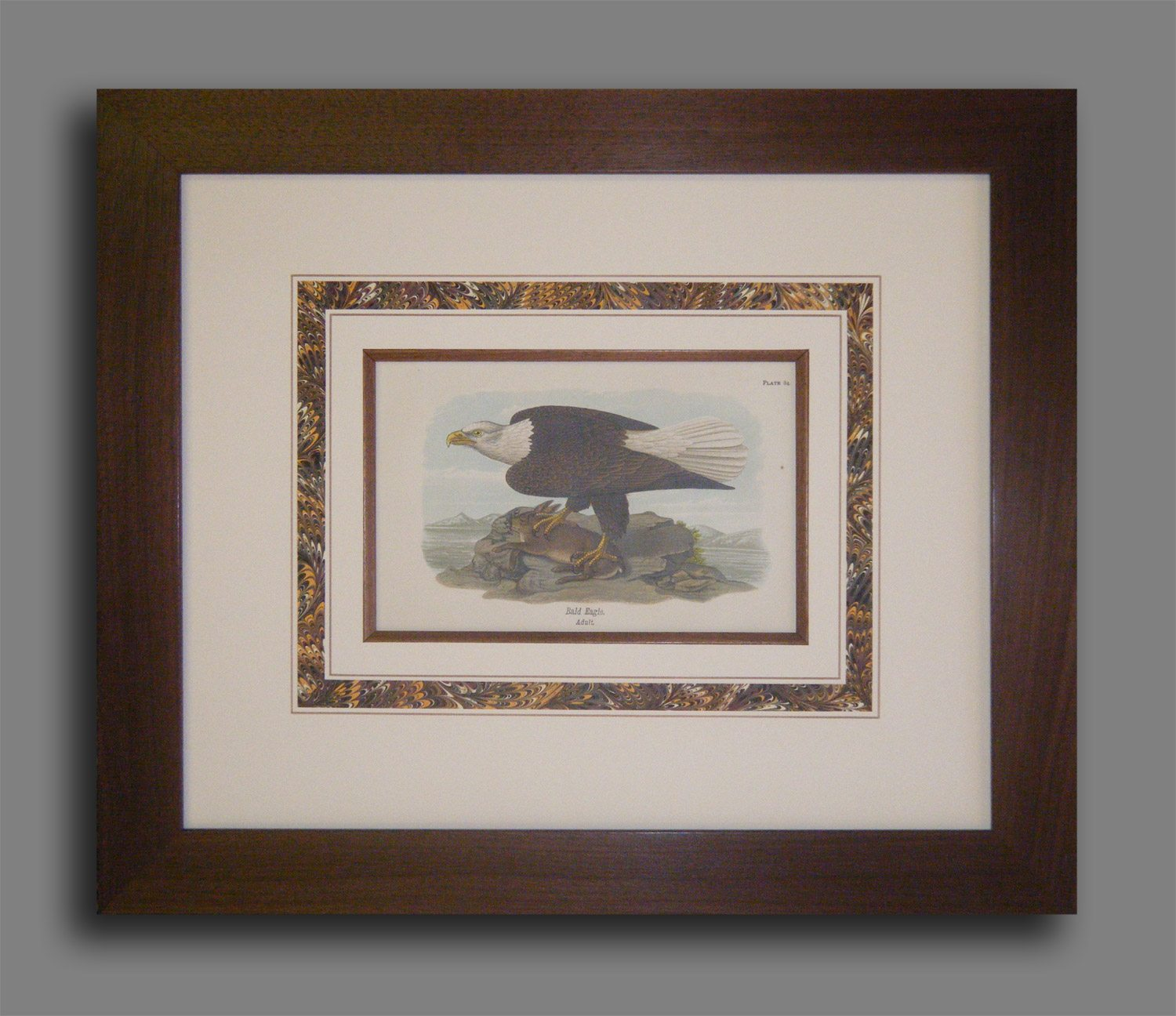 BH Warren Bird Print - 1889