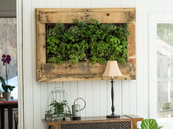 Creating Your Own Living Wall Garden