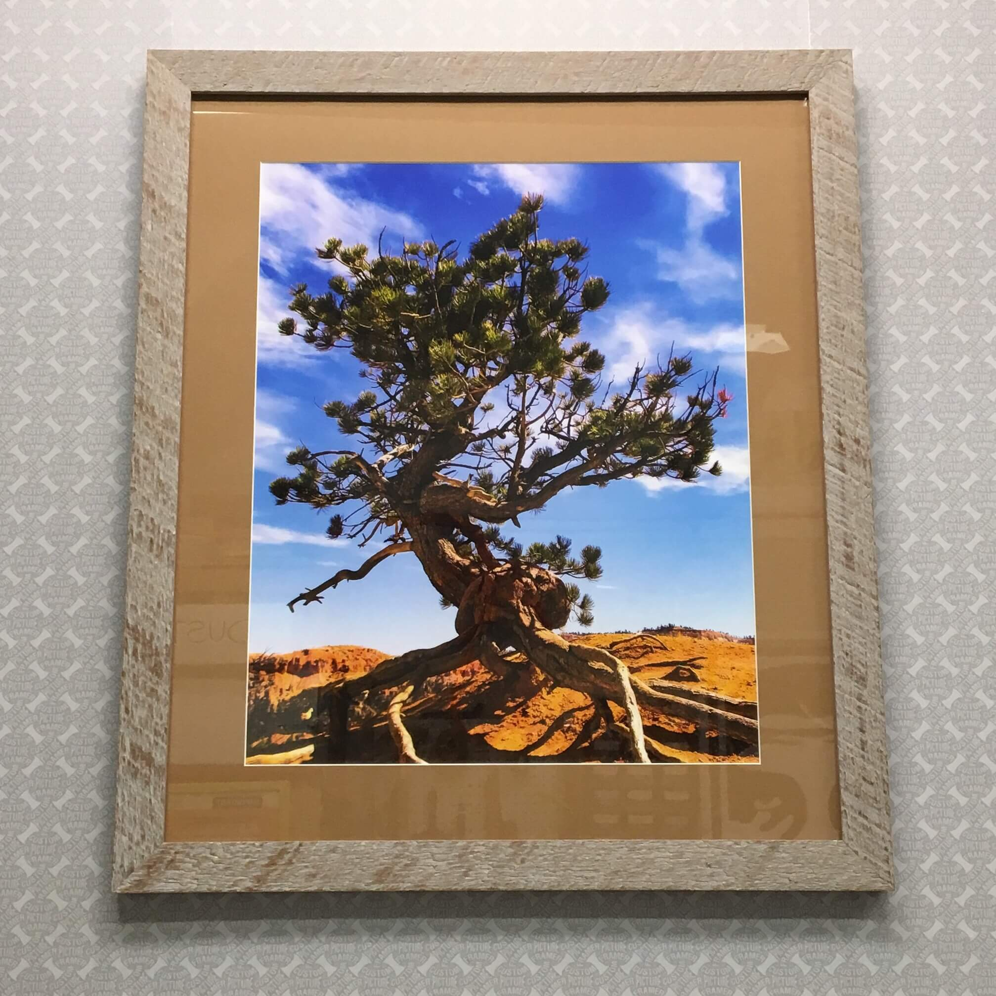 """Bryce Canyon Tree"" by Photographer Damien Bash - custom framed in a rustic barnwood moulding sourced and milled in Pennsylvania. See more custom framing options at our Keswick Village showroom just north of Philadelphia in Glenside PA ( Pennsylvania ) , 19038 . Custom Picture Framer of Glenside carries several thousand frame styles, prints, maps, limited editions, mirrors, and more!"